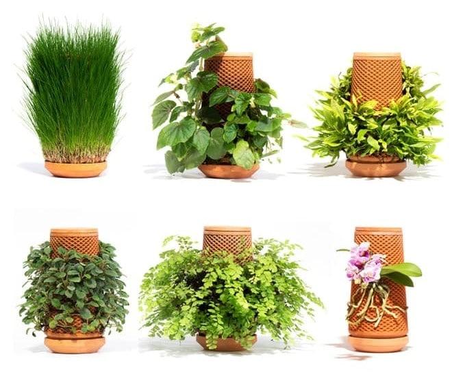 terraplant (1)